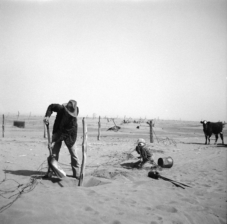Dust bowl farmer raising fence to keep it from being buried under drifting sand. Cimarron County, Oklahoma. 1936